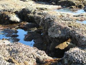 laguna-beach-homes-ocean-life (12)
