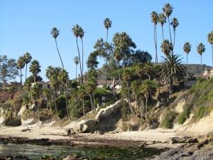 laguna-beach-homes-ocean-life (13)
