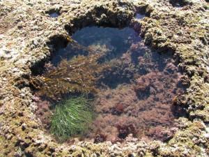 laguna-beach-homes-ocean-life (23)