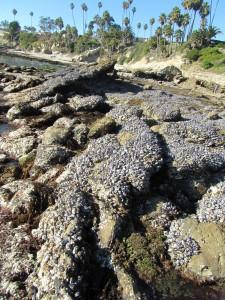 laguna-beach-homes-ocean-life (24)