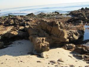 laguna-beach-homes-ocean-life (31)