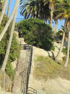 laguna-beach-homes-ocean-life (32)