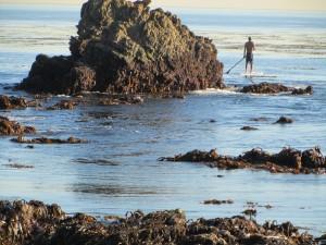 laguna-beach-homes-ocean-life (37)