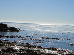 laguna-beach-homes-ocean-life (4)