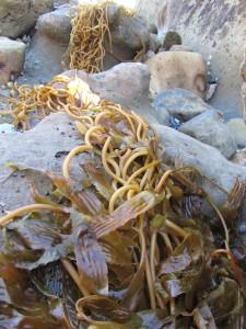 laguna-beach-homes-ocean-life (46)