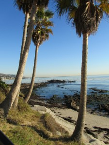 laguna-beach-homes-ocean-life (48)
